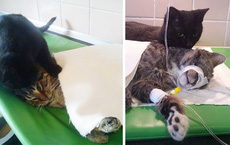 Chú mèo hiếm có: Lăng xăng làm 'y tá' gợi nghĩ đến một phẩm chất tuyệt vời ở con người