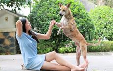 """""""Khuyển vương"""" 300 triệu và bí mật thương vụ chuyển nhượng chó Phú Quốc đắt nhất VN"""
