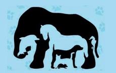 Phải rất tinh mắt mới nhìn đủ 8 con vật trong bức tranh ảo giác