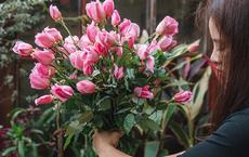 """""""Làm thế nào để giữ cho hoa cắm trong bình tươi lâu hơn?"""" và đáp án mang đến lợi ích trọn đời cho tất cả mọi người"""