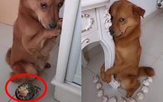 """Gặm mất một góc cây xương rồng, chú chó sợ bị phạt nên làm mặt nũng nịu khiến chủ """"bó tay"""""""