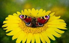 Rõ là hình con bướm đậu trên bông hoa, tại sao có thể nói đây là một... cô gái?
