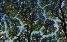 """Không chỉ con người, cây xanh cũng """"giãn cách xã hội"""" và đây là lý do"""