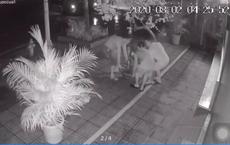Clip: 4 giờ sáng, 3 người đàn ông đi ô tô rủ nhau bê chậu hoa giấy bên đường mang về