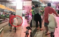Nằng nặc đòi theo ông chủ đi chợ, chú chó phải ngồi xổm bó gối trong cái giỏ vì quá béo
