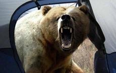 """Nhiếp ảnh gia nổi tiếng bị gấu tấn công đến chết và bức ảnh chụp """"thủ phạm"""" cuối đời gây ám ảnh nhưng che giấu sự thật ít ai biết"""