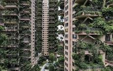 Cây cối tràn ngập dự án chung cư ở Trung Quốc, biến 'thiên đường sinh thái' thành 'khu rừng muỗi đốt'