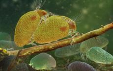 Dùng máy chụp cắt lớp, các nhà khoa học Trung Quốc phát hiện tinh trùng 'khổng lồ' 100 triệu năm tuổi trong hổ phách hiếm