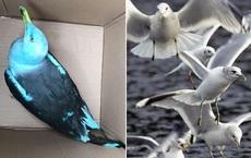 Được báo có chim quý ở bãi đậu xe, các nhân viên tới nơi phát hiện sự thật cười ra nước mắt