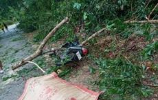 Đi xe máy khi bão số 5 đổ bộ, người đàn ông bị cây đè tử vong