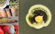 Từ nghiên cứu aflatoxin gây ung thư tại Việt Nam: 6 loại độc tố nấm nguy hiểm thế nào?