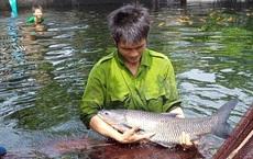"""Chàng trai bỏ công việc lương cao về quê nuôi cá """"khổng lồ"""": Không phải ai chán thành phố cũng về quê """"nuôi cá và trồng thêm rau"""" được đâu!"""