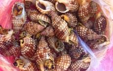 Tử vong do ăn ốc lạ: BS khuyến cáo độc chất nguy hiểm, nấu chín không hết, gây nên 4 cấp độ ngộ độc hải sản