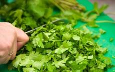 Rau mùi tốt thế nào? Bất ngờ với hàng loạt dưỡng chất trong loại rau rất quen thuộc với người Việt