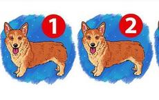 Trong bức tranh 3 con chó, đố bạn tìm ra con chó khác biệt trong vòng 5 giây