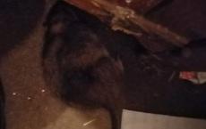 Tỉnh dậy giữa đêm, bà mẹ suýt ngất vì bị chuột bò lên mặt, vài ngày sau chuyện kinh dị xảy ra