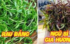 Những loại rau mọc dại khắp các vùng quê Việt Nam cực hiếm người biết, ngày nay được săn lùng vì 'quý như vàng'