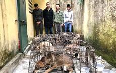 Nổ súng bắn chỉ thiên bắt ổ nhóm trộm chó tông vào xe CSGT, cố thủ trong nhà