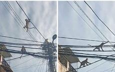 """Di dời đàn khỉ """"tung hoành"""" giữa khu dân cư ở Sài Gòn"""