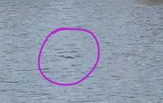 Nghi xuất hiện 2 con cá sấu giữa hồ nước ở TP Vũng Tàu: Tìm kiếm, thuê thợ tới bắt