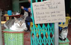 """Con mèo """"khó ở"""" ngồi chễm chệ trước quán ăn khiến chủ phải viết ngay biển cảnh báo, ai đọc cũng buồn cười"""