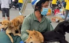 Vụ đàn chó về quê tránh dịch cùng đôi vợ chồng nghèo bị tiêu hủy: Luật sư lên tiếng