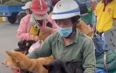 Ồn ào vụ tiêu huỷ 15 con chó theo chủ về quê tránh dịch: Động vật có khả năng là vật trung gian lây Covid-19 cho người không?