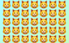 Đánh thức thị giác: Chỉ người tinh mắt mới nhìn ra con mèo khác biệt trong 1 giây