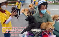 Chú chó may mắn sót lại trong đàn 15 con bị tiêu hủy: Đã được tắm rửa khử khuẩn, chủ mới test âm tính