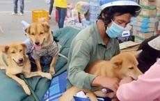 """Vụ đàn chó 15 con bị tiêu hủy: Một người đàn ông kêu cứu vì nhận được hàng chục cuộc gọi """"đe dọa"""""""