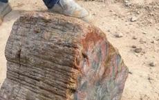 Lên núi đốn củi tình cờ nhìn thấy khối gỗ khổng lồ, người nông dân đến gần mới ngã ngửa, hóa ra nó là thứ nguyên liệu này