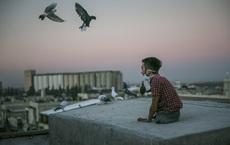 24h qua ảnh: Chàng trai cụt chân ngồi giữa đàn chim bồ câu trên mái nhà ở Idlib