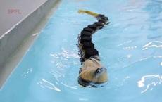 Loài cá ký sinh có bộ răng đáng sợ này đã truyền cảm hứng để chế tạo robot