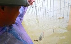 Người dân thả lưới bắt cá giữa đường ngập ở Hà Tĩnh