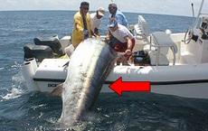 Ba người đàn ông vật lộn với chiếc cần câu cong vút, bất ngờ với kích thước con cá khi kéo lên