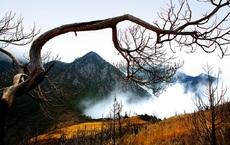 Khu rừng đẹp tuyệt trần tại Tứ Xuyên nhưng ít ai dám đặt chân tới: Dân địa phương khuyên nên tránh xa!