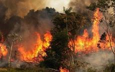 Syria: Đốt rừng, 24 người bị xử tử