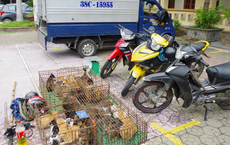 Nữ quái cầm đầu nhóm trộm mèo, đang mang đi bán thì bị bắt quả tang