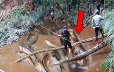 Nhóm người cầm giáo dài đứng vây quanh con sông, hàng loạt 'thủy quái' bị bắt lên bờ
