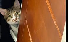 Bị mèo cưng đánh thức lúc 3 giờ sáng, cô chủ kinh hãi ngó xuống nhà: Lập tức báo cảnh sát!