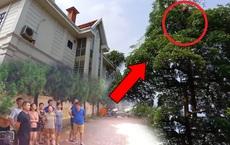 'Quả bom nổ chậm' treo lủng lẳng trên cây cao gần ngôi biệt thự, bất ngờ ngoài dự đoán!