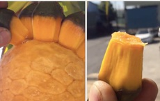 Hiếm người biết Việt Nam có một loại quả mọc dại ăn rất thơm ngọt, xem clip mà dân mạng chẳng ai đoán được tên