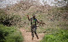 """Từng đàn châu chấu chục triệu con bủa vây giăng kín trời Đông Phi: Người dân """"tương kế tựu kế"""" thu lợi lớn"""