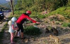 """Hàng loạt tai nạn thương tâm, người dân Đà Nẵng vẫn vặc lại BQL Bán đảo Sơn Trà khi bị nhắc nhở """"chiều hư"""" đàn khỉ"""
