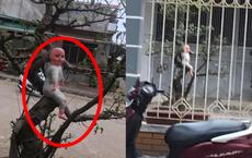 """Hình ảnh """"đứa bé"""" vắt vẻo trên cây, ai lướt qua nhìn thấy cũng thấy rợn người"""