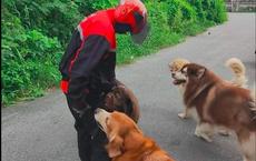 """Ngày nào đi giao hàng cũng bị 4 con chó hung dữ vây quanh, người đàn ông buộc phải làm 1 việc này mới có thể """"thoát thân"""""""