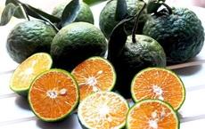 Sự thật về lời đồn 'ăn cam sau khi uống thuốc gây ngộ độc'