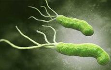 Thấy con xanh xao thiếu máu, đi khám mới biết cả nhà nhiễm loại vi khuẩn chết người