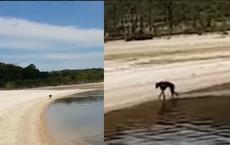 Ra đảo chơi thì thấy 1 sinh vật đáng sợ, nhìn rõ mặt người đàn ông quyết tâm mang về nhà