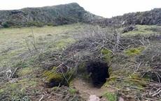 Thỏ đào hang vô tình 'khai quật' được kho cổ vật vô giá
